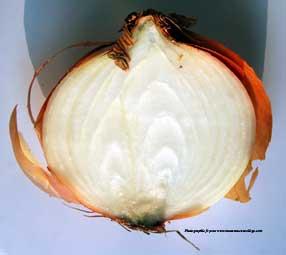 La collonisation du milieu par les v g taux monanneeaucollege for Oignon amaryllis