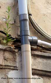 La collonisation du milieu par les v g taux monanneeaucollege for Planter oignon amaryllis